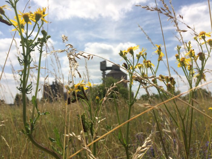 Web Colloque Friches & Biodiversité